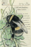 """Insects tumblr itscolossal Bombus terrestris"""" """"Jo Brown"""" """"Devon,"""