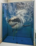 Shark Shower