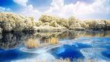 ^ Winter beauty