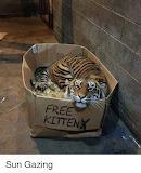 funny-Free kitten