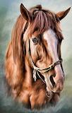 #Chestnut Horse