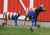 Stars and Stripes Cows