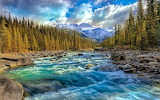 Nature-creek-forest-mountain