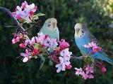 Lovely Spring Birds