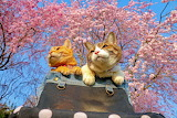 Globe-Trotting Cats--Cherry blossoms