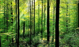 Forests-why-matter 63516847