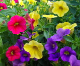 ☺♥ Joyful colors...