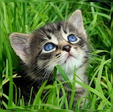 Baby Blue Eyes...