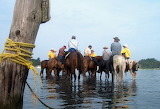 saltwater cowboys at Pony Penning