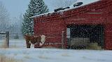 ^ Old Red Barn ~ R. Fulcher