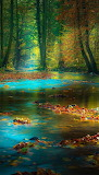 #Autumn Forest Spessart, Germany by Rolf Nachbar