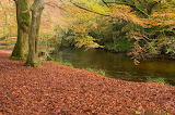 For 715ajan3 Cornwall In Autumn