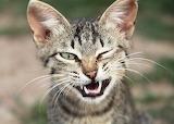 cat###724 92