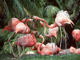 Flamingos, birds, animals, nature, trees
