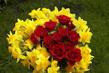 ^ Red roses and yellow daffodils