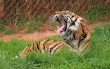 Animals wildlife nature (394)