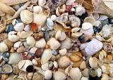 Seashells-in-cabarete-1024x729