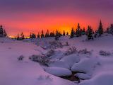 Snow-trees-sunset-sky