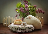 Guinea pig, cakes, lilac, bun, fence, animal, flowers, cup, tabl