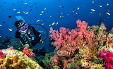 Underwater-world-Egypt's-Red Sea