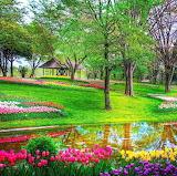 * Beautiful Spring...
