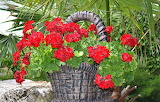basket of red flowers