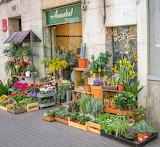 Barcelona, shop, florist, exhibition, exterior, plants and flowe