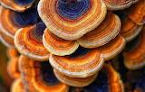 Colorful mushrooms, nature