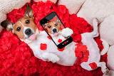 Dogs Jack Russell terrier Selfie Smartphone 540920 1280x853