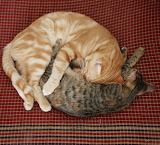Cute Yin and Yang