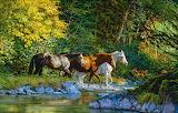 Horses crossing creek