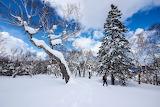 Japan Winter Sapporo Hokkaido Snow Trees Spruce 561540 2836x1890