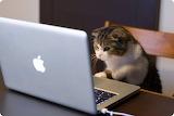 Cat - Working