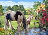 Ponies - Steve Crisp