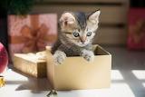 Christmas-kitten-playing-box