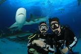 Photobombing shark