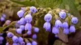 Beauty-of-flowers