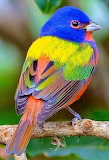 Very colorful bird