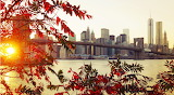 Autumn, leaves, bridge, city, Brooklyn, New York, river, water,
