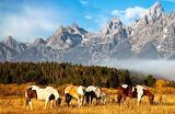 Horses - Grand Tetons - Wyoming