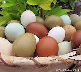 ^ Eggs in a basket