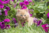 Kitten-in-garden