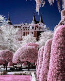 More Pink trees