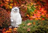 Gato en otoño