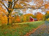 Farm Road Fall