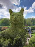 Green hedge cat