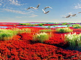 #Liaohe Delta Wetland in Liaoning