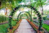 PAT0026 Archway for a Princess 80574368
