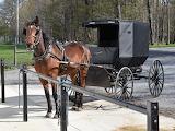 Amish Buggy Horse Ohio