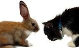 Bunny & Cat